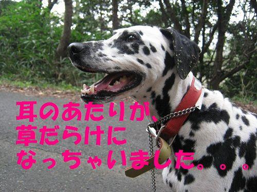 IMG_3912 - コピー