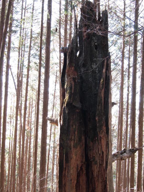 2012年 3月25日 武甲山×子持山×大持山 14