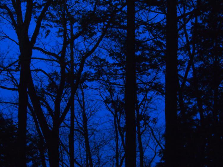 2012年 4月1日 雲取山 4