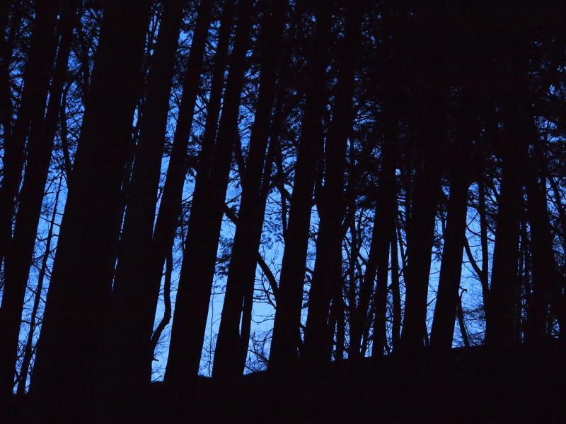 2012年 4月1日 雲取山 5