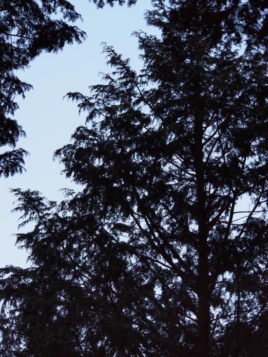 2012年 4月1日 雲取山 7