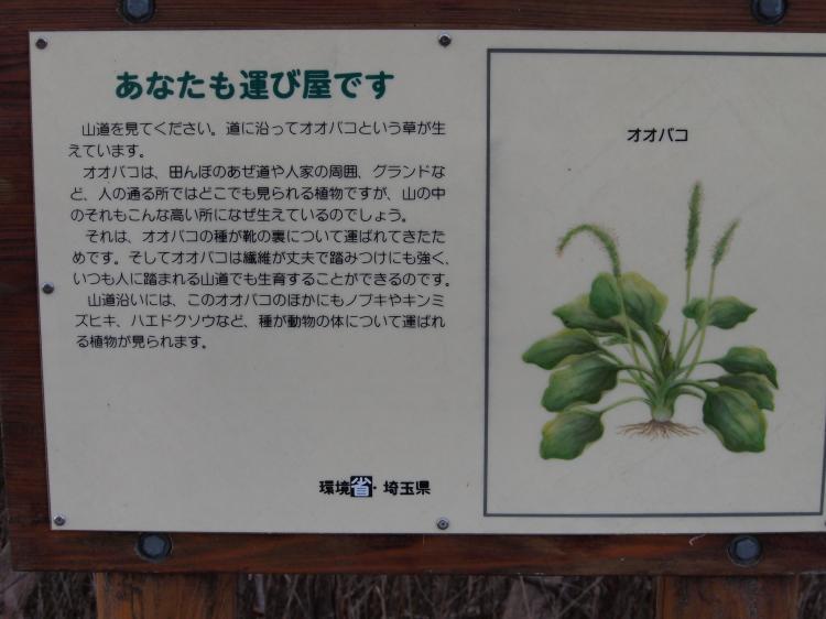 2012年 4月1日 雲取山 16