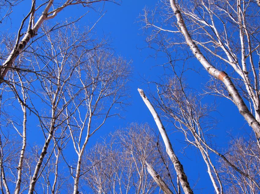 2012年 4月1日 雲取山 33