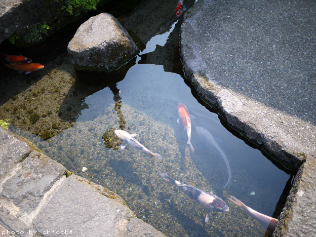 tainooyogumatchi-15.jpg