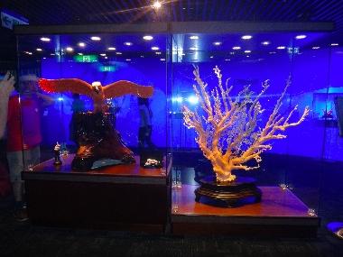 台湾珊瑚1