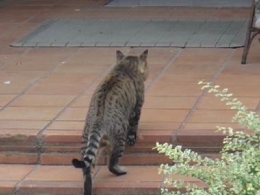 猫0909