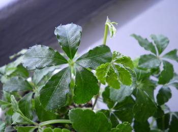Green0710-2.jpg