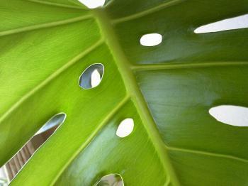 Green0821-2.jpg