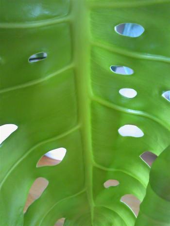 Green0927.jpg