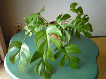 Green1107.jpg