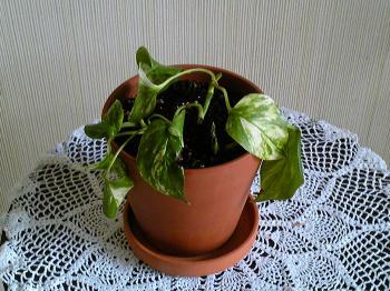 Green201105052.jpg