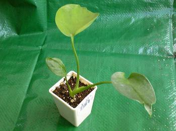 Green20110806_20111119001557.jpg