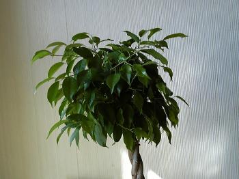 Green20111125-2.jpg