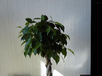 Green20111125-3.jpg