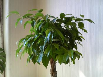 Green20111125.jpg