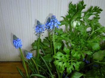 garden0129-2.jpg