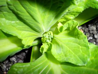 garden0302.jpg