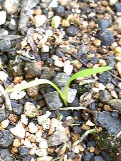 garden0519-8.jpg
