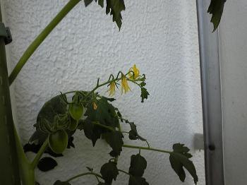 garden0725.jpg