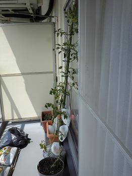 garden0903-2.jpg