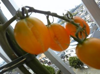 garden0903-9.jpg