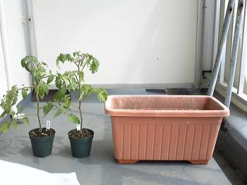 garden110517-2.jpg