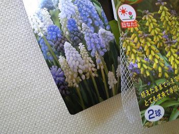 garden20111117.jpg