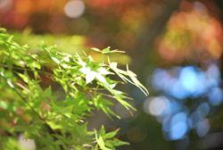 DSC_0590永源寺