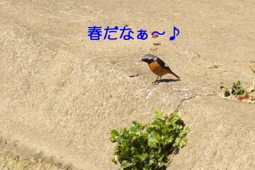 000_20110329231815.jpg