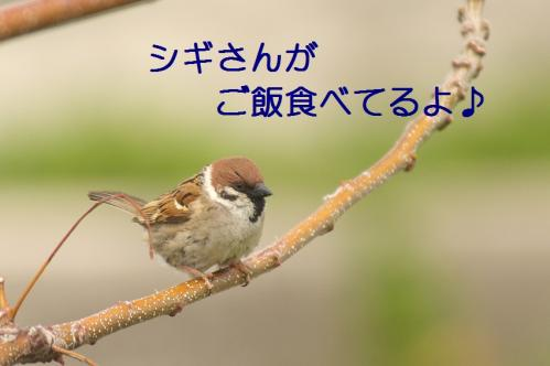 000_20110503173528.jpg