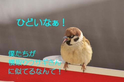 000_20120131202520.jpg