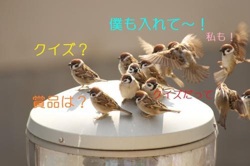 001_20110129213301.jpg
