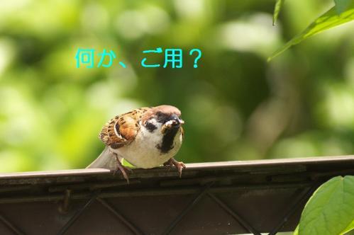 001_20110531202132.jpg