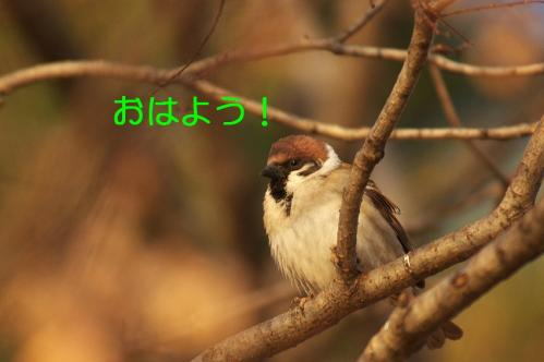 002_20110227202755.jpg