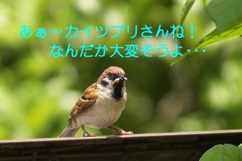 002_20110531202132.jpg
