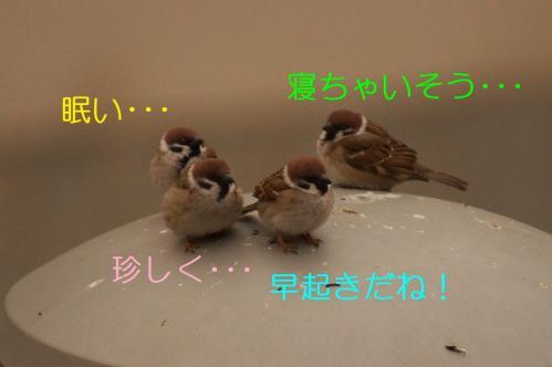 003_20110315205438.jpg