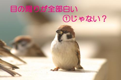 008_20110129213459.jpg