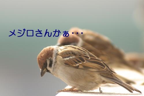 009_20110129213458.jpg