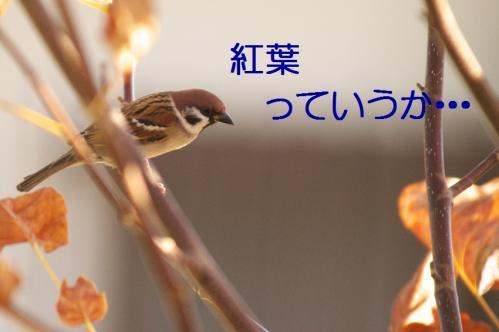010_20101130191352.jpg