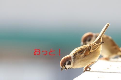 010_20110120222204.jpg