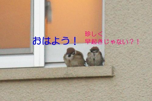 010_20110123203845.jpg
