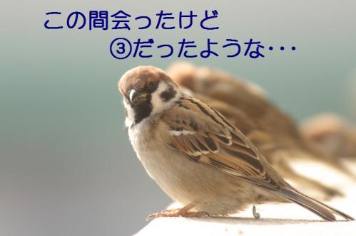 010_20110129213458.jpg