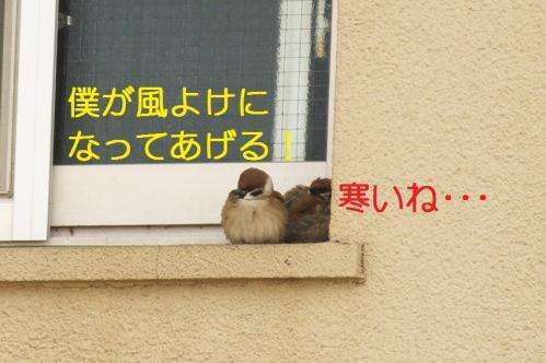 010_20110131211630.jpg