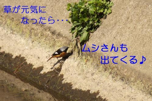 010_20110329231814.jpg