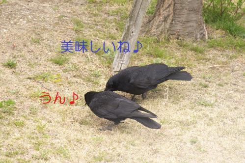 010_20110331222032.jpg