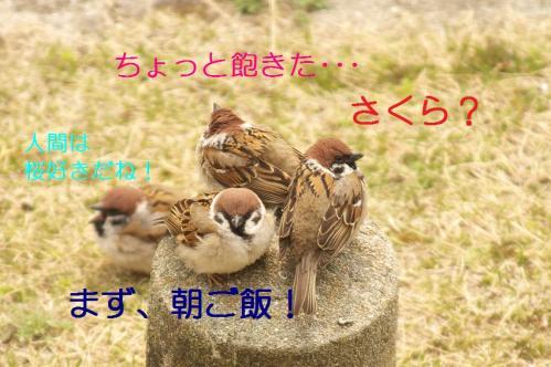 010_20110406222914.jpg