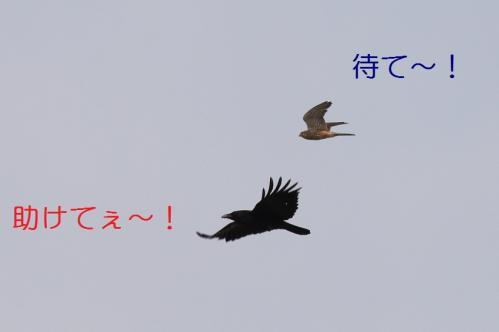 010_20110415043113.jpg