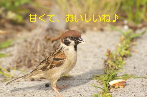 010_20110608221300.jpg