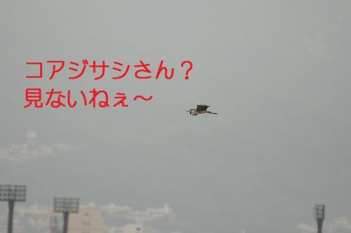010_20110621204932.jpg