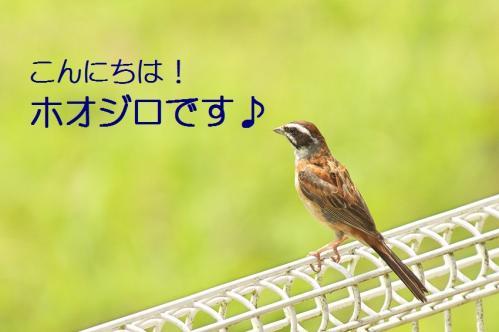 010_20110730220638.jpg